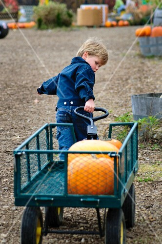 A little boy pulling along a pumpkin in a cart