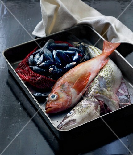 Fish and mussels in a metal container