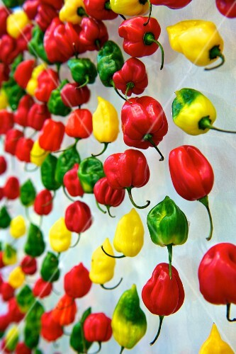 Colourful chilli peppers