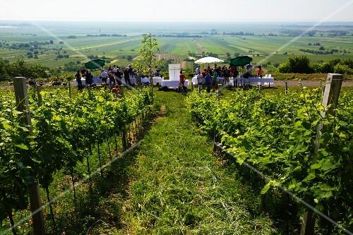 A wine tasting session on Leithaberg (Austrian mountain landscape)