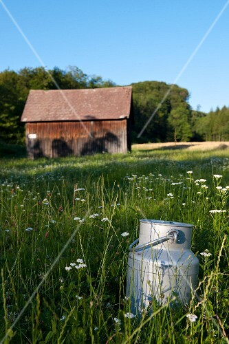 A milk churn in a field
