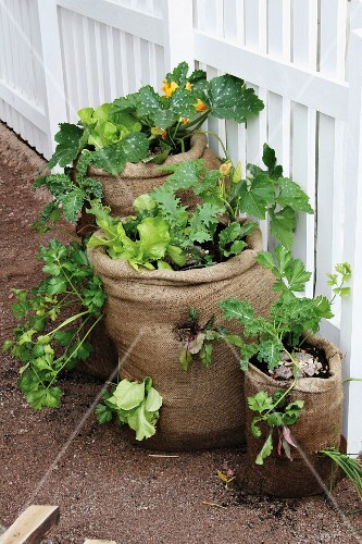 Compost and plants in sacks next to garden fence