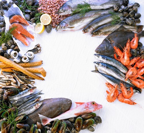Fish and seafood forming a frame – buy images – StockFood