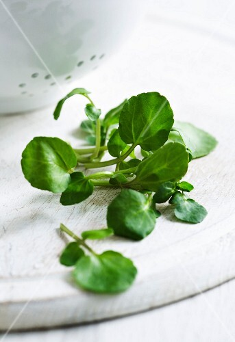 Fresh watercress in front of a colander
