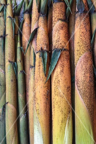 Edible bamboo at a market in Vientiane, Laos