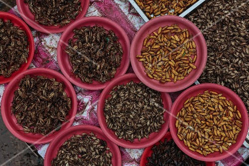 Silk worms and crickets at a market in Vientiane, Laos