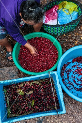 A woman selling wild berries at a market in Vientiane, Laos