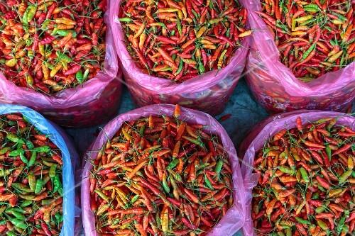Plastic sacks of fresh chilli peppers, Vientiane, Laos