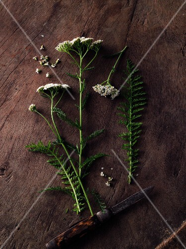 Yarrow on a wooden surface