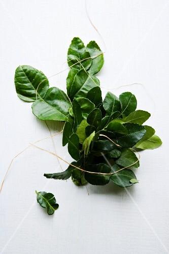 A bundle of kaffir lime leaves