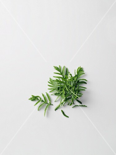 Mugwort leaves