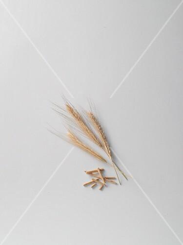 Barley, ears and stems