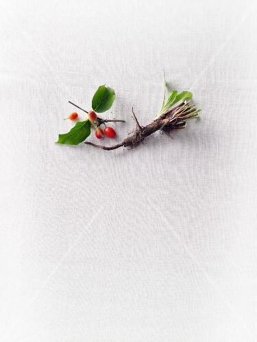 Chicory roots and cornelian cherries
