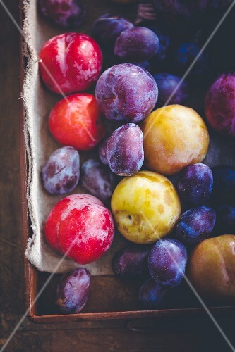 Various plums and damsons