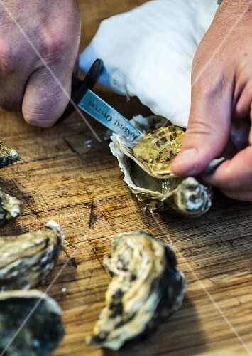 Oysters being opened with an oyster knife