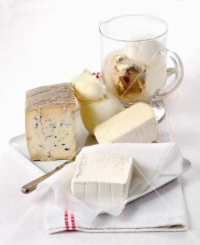 Various types of buffalo milk cheese