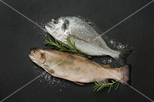 Fresh seabream and brook trout