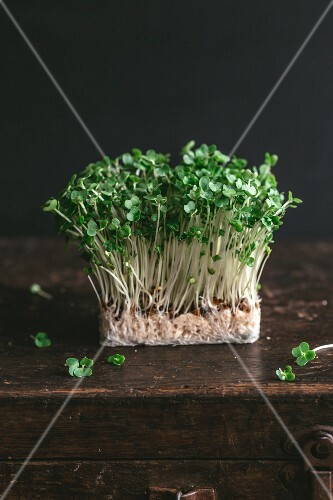 Fresh cress on a wooden crate
