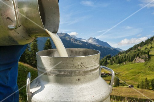 Organic milk being poured into a milk churn after milking (Engadin, Grisons, Switzerland)