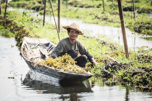 A farmer with a boat in floating islands on Inle Lake (Myanmar, Burma)