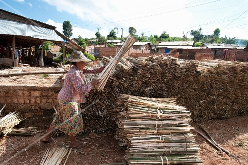 A woman stacking bamboo for making traditional paper (Myanmar, Burma)