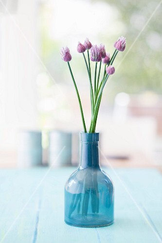 Chive flowers in blue glass vase