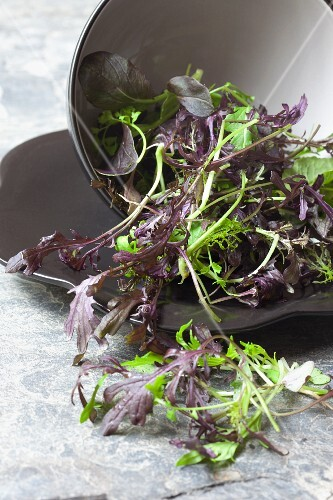 Asian mixed lettuce