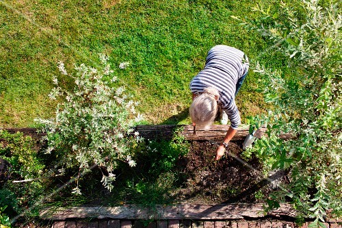 View down onto woman gardening