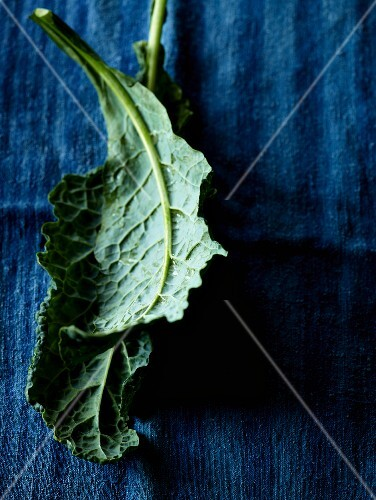 Kale leaves on a blue surface