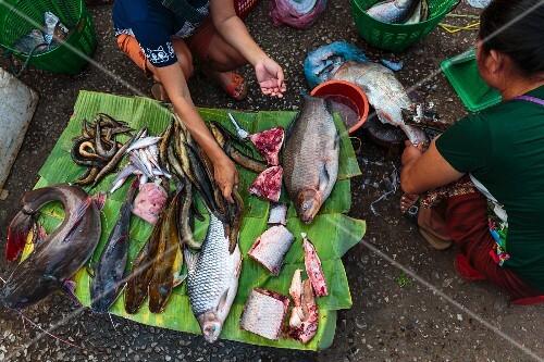 Fresh fish from the Mekong on a banana leaf at a market in Luang Prabang, Laos
