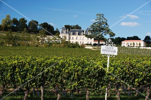 A vineyard with Château Fonplegade in the background, Bordeaux, France