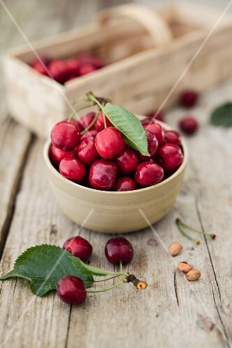 Freshly harvested cherries in a bowl and on a wooden table