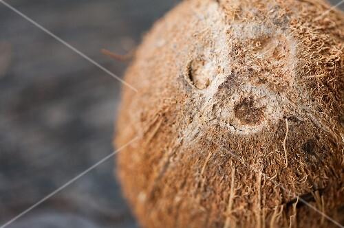 A coconut (close-up)
