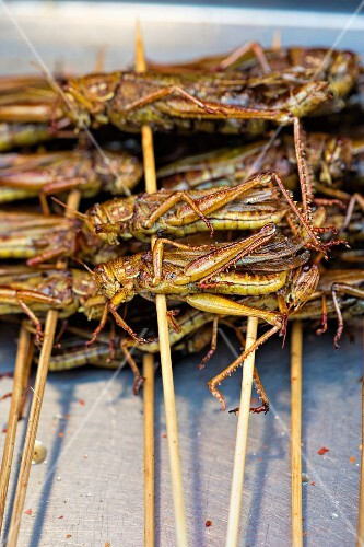 Grasshopper kebabs on a market stand (Asia)