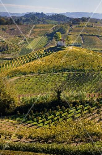 A chapel on a hill in a vineyard in the Barolo region