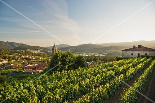 A view from the Casal de Arman winery over the vineyards to San Andrés de Camporredondo, Ribadavia