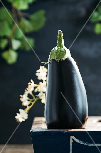 An aubergine in the sunshine