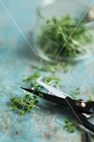 Herb scissors and cut cress