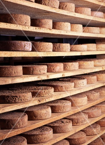 Wheels of Toma piemontese cheese ripening on shelves