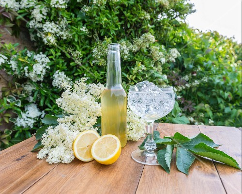 Elderflowers, elderflower syrup and lemons on a wooden table in a garden