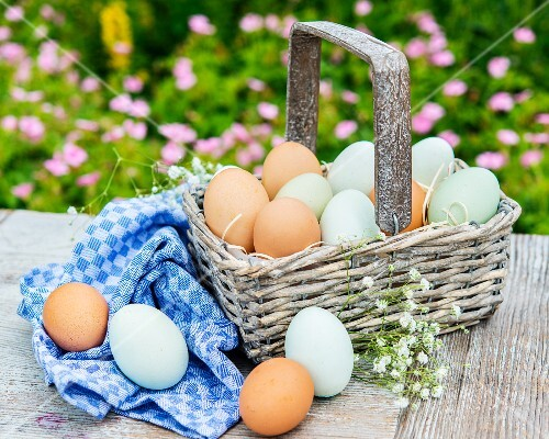 Brown and green eggs in a basket on the garden table