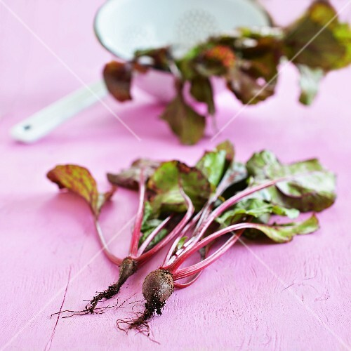 Beetroot with roots with fresh leaves in a colander in the background
