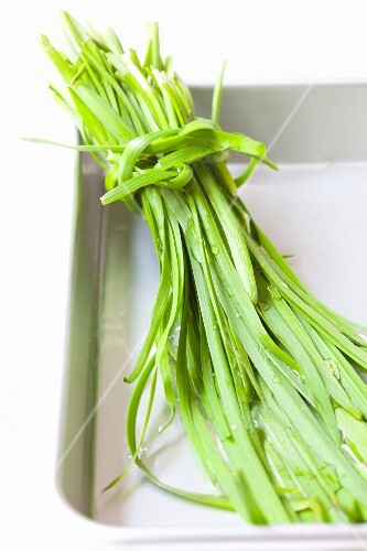 A bundle of garlic chives