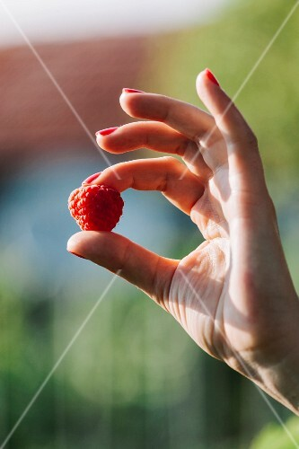 Woman's hand holding a raspberry