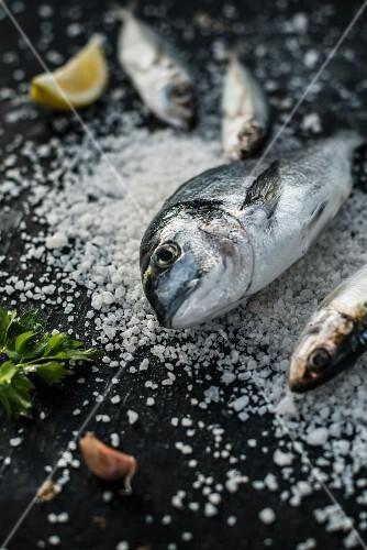 An arrangement featuring a raw sea bream on coarse sea salt