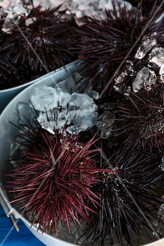 A bucket of sea urchins at a market in San Diego, USA