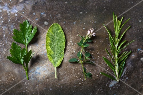 Four types of fresh herbs