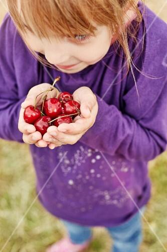 A little girl holding cherries