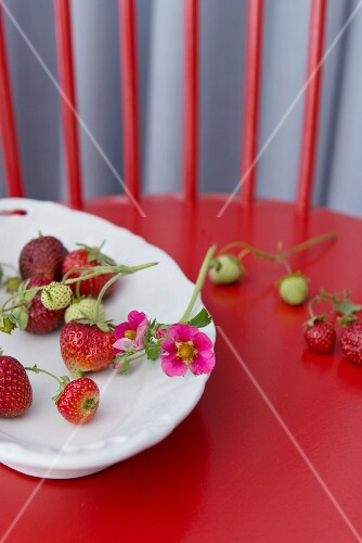 Strawberries in a porcelain bowl on a red wooden chair
