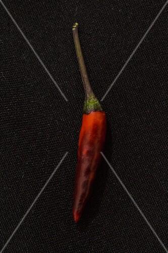 A Maui Purple chilli pepper